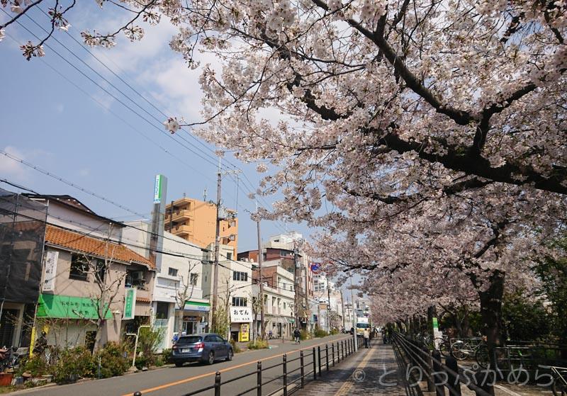 東淀川駅前の桜3