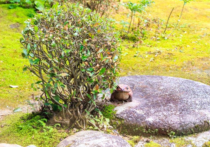 竹情荘の庭にカエル