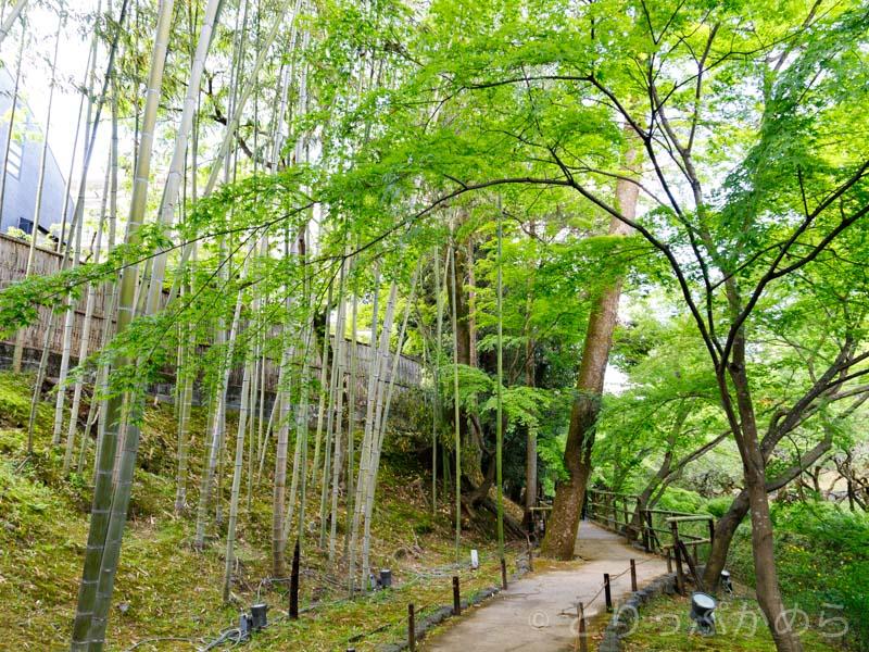 竹林と青もみじのコラボが綺麗