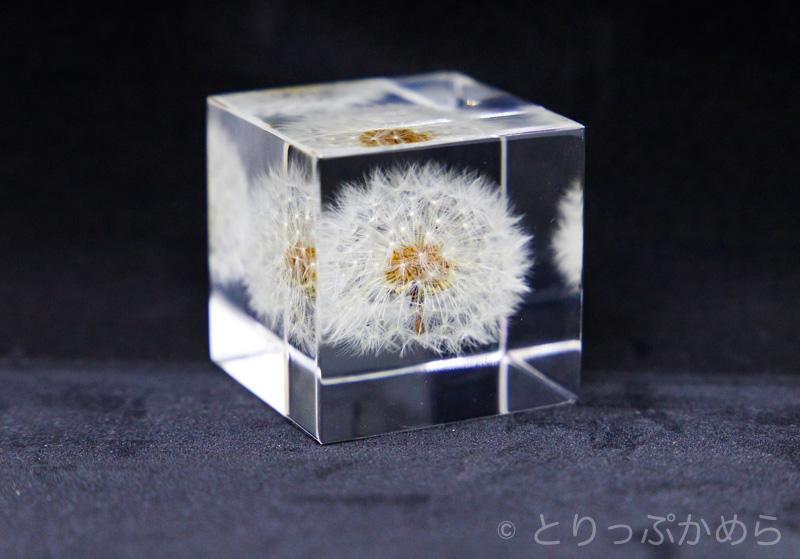 ウサギノネドコミセで購入したタンポポの「sola cube」