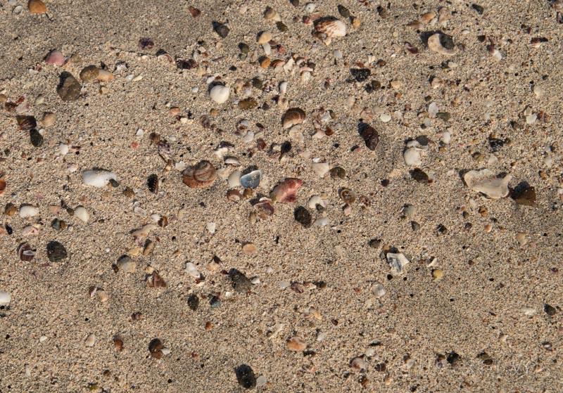 人津久の浜の砂浜の貝殻