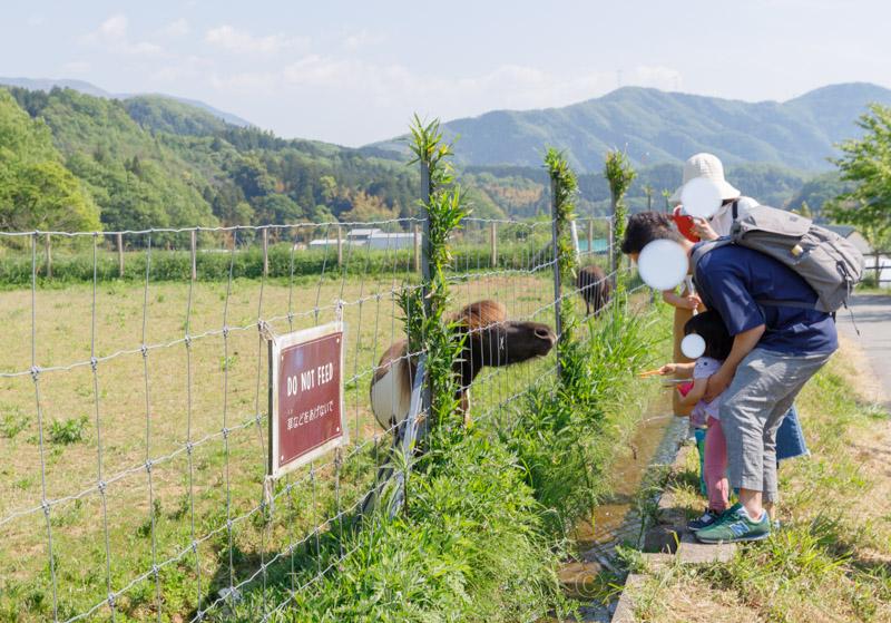 ローザンべリー多和田のポニーの餌やり風景