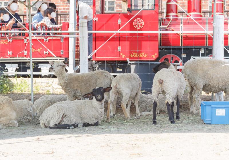 ローザンベリー多和田の羊