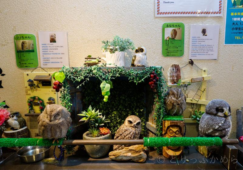 奈良のフクロウカフェの本物と偽物