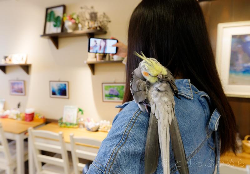 奈良のフクロウカフェでインコ肩に乗せてみた
