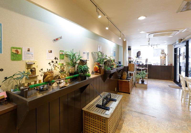 奈良のフクロウカフェわたわたの店内
