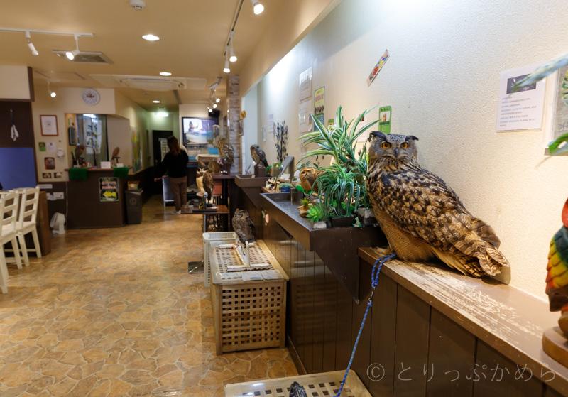 奈良のフクロウカフェわたわたの店内2