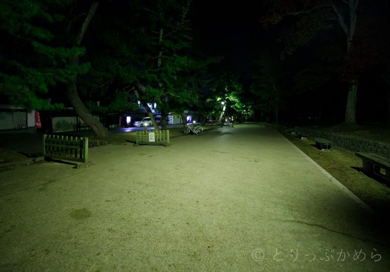 奈良の夜の鹿は昼と同じ場所にはいない2