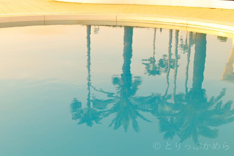和歌山マリーナシティホテルのプールに映るヤシの木